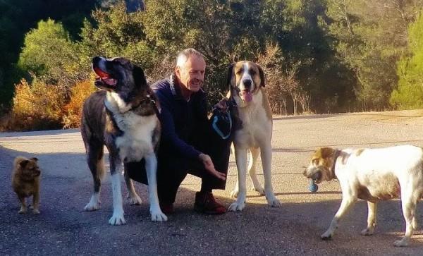 Nigel-dogs