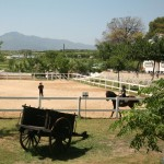Casa Rural Activities - Horse Riding